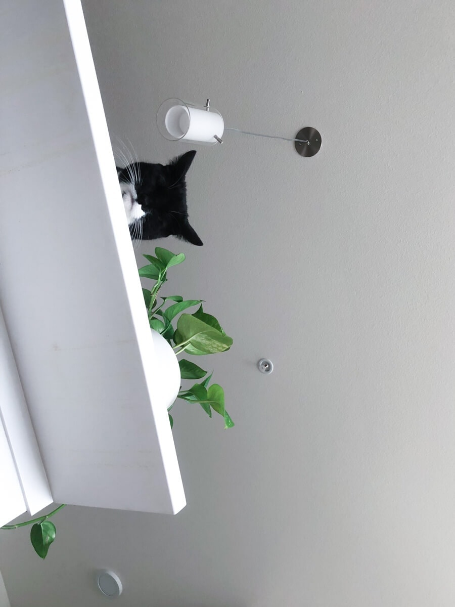 Cat peaking over a kitchen counter.